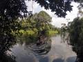 Salonga1©MircoTribanek-Bassin-Congo.jpg